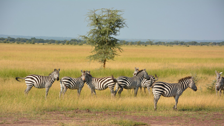 melia Serengeti